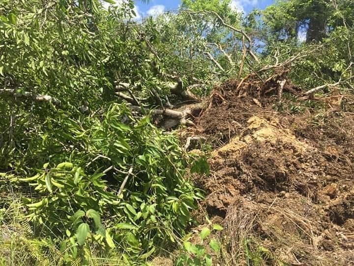 Photo of Existe una práctica indígena que ayuda a mitigar las olas de calor: se llama preservar los árboles.