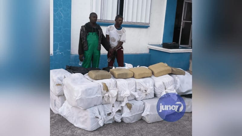 Photo of Haití arresta a 2 jamaicanos con más de 670 kilos de marihuana